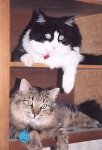 Bandit & Desmond in 2000