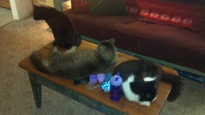 Cats on coffee table