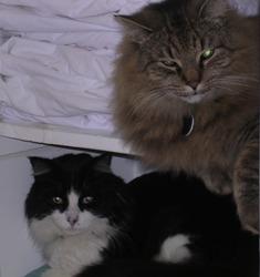 Bandit & Desmond
